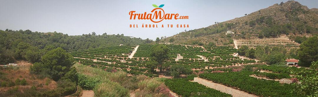 FrutaMare