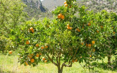 El Naranjo: Todo lo que Debes Saber