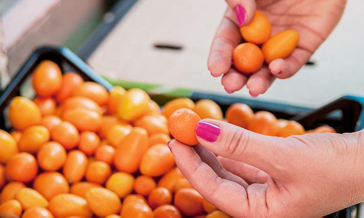 Kumquat, la naranja enana