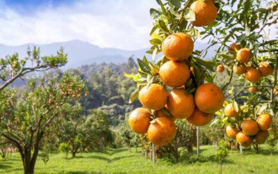 Naranjas Ecológicas: Todo lo Que Debes Saber