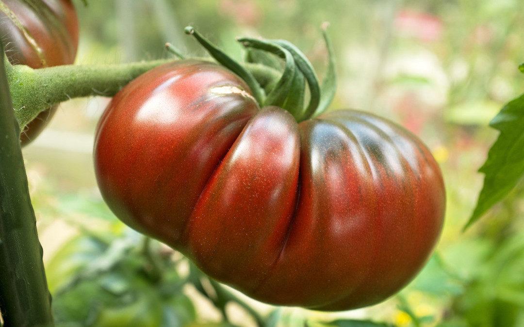 6 Propiedades del Tomate Únicas y Saludables