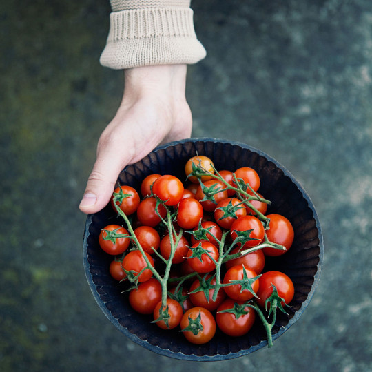 propiedades del tomate small