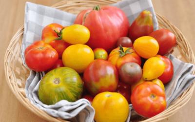 Todas las Variedades de Tomate que Existen