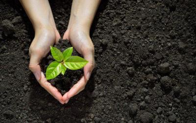 Cómo Plantar un Naranjo: Todas las Claves