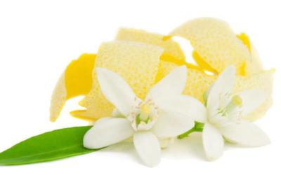 Todo lo que Debes Saber Sobre la Hoja de Limón