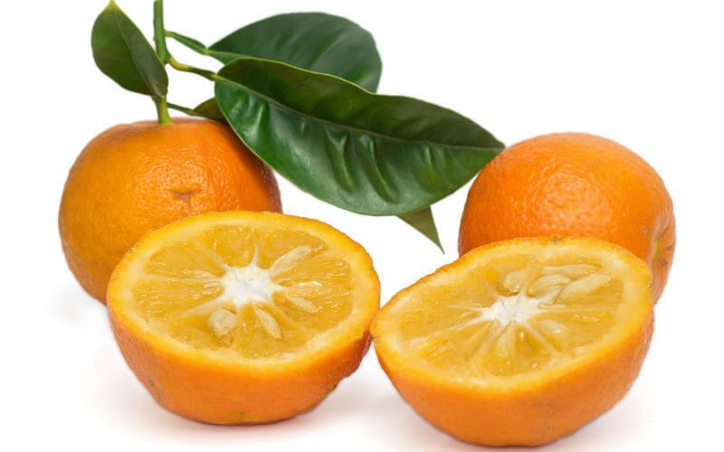 Curiosidades del Naranjo Amargo